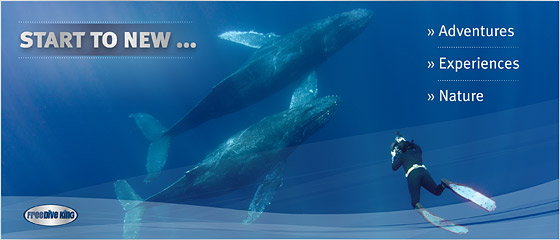 www.Freedive-King.de